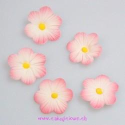 """Décorations en sucre """"Daisy Pink"""" pk/12"""